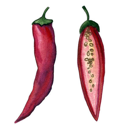 Red hot chili set. Hand drawing watercolor. Can be used for postcards, stickers, encyclopedias, menus, ingredients of dishes. Style design for the label, cover, prints for some surfaces.