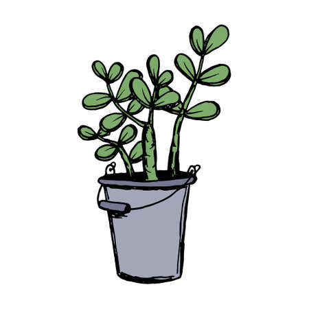 Set of different hand drawn house plants in pots. Isolated decorative plants: aloe, crassula, flower for your design template, icon, gift card. Sketch style vector illustration.