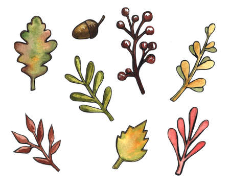 Watercolor illustration of yellow and red autumn leaves, Birch leaves, mountain ash,maple, oak. acorns, chestnuts and nuts. Stockfoto