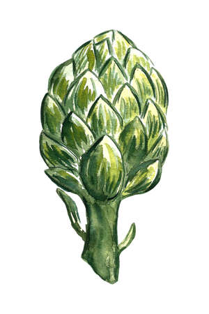 Handpainted watercolor poster with artichokes isolated on white background Banco de Imagens