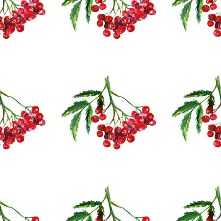 Rowan, autumn rowanberry, watercolor illustration of mountain ash, isolated drawing of leaves and berries