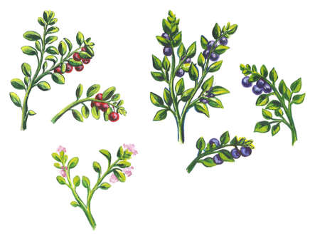 sets, frames bouquets of fruits and berries. Isolated on white background. Watercolor illustration