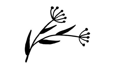 Hand drawn vector illustration of wildflowers. Doodle floral element. Spring and summer symbol. Contour otline drawing of simple black twig Vecteurs
