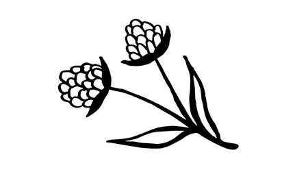 Hand drawn vector illustration of wildflowers. Doodle floral element. Spring and summer symbol. Contour otline drawing of simple black twig
