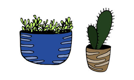 Vector hand drawn illustration of cactus and herbs. Green houseplant in the pot. Home interior decoration. Gardening plant