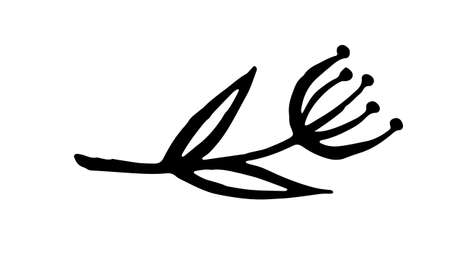 Hand drawn vector illustration of herbs. Doodle floral element. Spring and summer symbol. Contour otline drawing of simple black twigs and flowers Vecteurs
