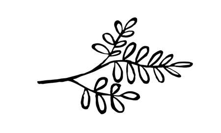 Hand drawn vector illustration of herbs. Doodle floral element. Spring and summer symbol. Contour otline drawing of simple black twigs and flowers Vectores