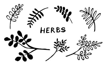 Hand drawn vector collection of herbs. Doodle floral element. Spring and summer symbol. Contour otline drawing of simple black twigs and flowers