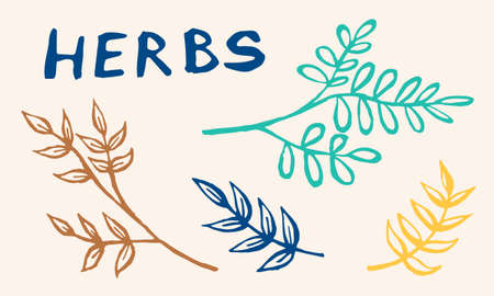 Hand drawn vector collection of herbs. Doodle floral element. Spring and summer symbol. Contour otline drawing of simple colorful twigs and flowers