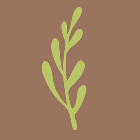 Vector doodle illustration of potherbs. Hand drawn healthy farm vegetable isolated on white background. Organic veggie grown in the garden.