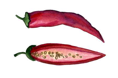 Chili pepper watercolor illustration. Hand drawn collection of spicy vegetables isolated on white background. Healthy eating ingredient. Vegetarian food. Imagens