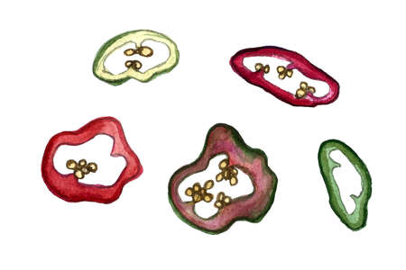 Chili pepper slices watercolor illustration. Hand drawn spicy vegetable isolated on white background. Healthy eating ingredient. Vegetarian food.