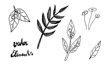 Plant branches and leaves. Hand drawn doodle illustration isolated on white background. Vector elements. Natural template for autumn design, print, greeting card, sticker pack