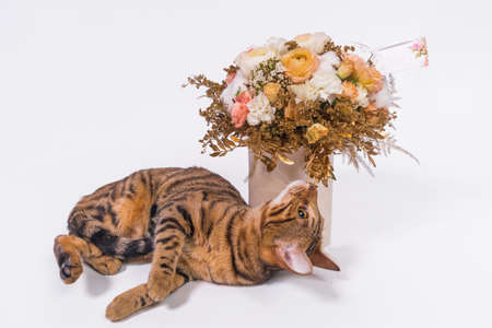 A striped cat is a sniffing a bouquet of roses on a white background.