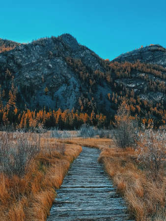 Autumn landscape with mountains and trees. Wooden trail.