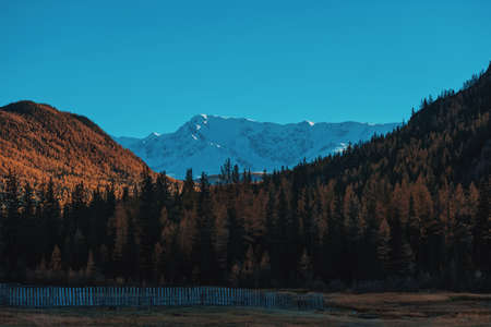 Autumn landscape with mountains and trees. Against the backdrop of a snowy mountain. Forest at the foot of the mountain. Blue sky and orange pines near the winter mountain.