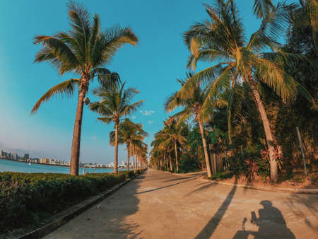 Nice asfalt road with palm trees against the blue sky and cloud. Palm trees grow along the road by the sea in China. Colorful image for the screen saver on the desktop.