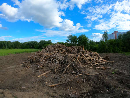Landfill of felled trees. Logs lie at a construction site.