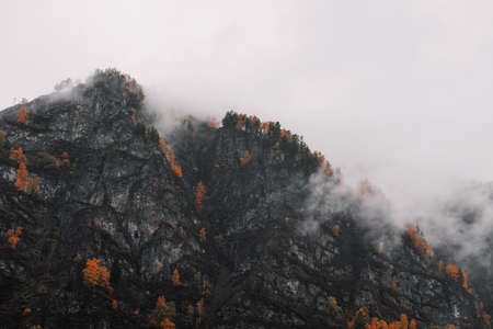 Beautiful autumn mountains are covered with fog after rain. Misty beech forest on the mountain slope in a nature reserve.