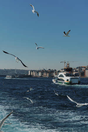 Seagulls fly behind a passenger liner. A flock of birds flies over the sea in the port. 写真素材 - 163555885
