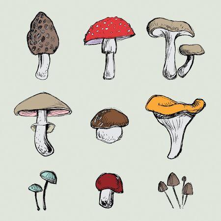 poisonous organism: Hand- drawn mushrooms set Illustration