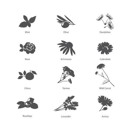 silhouette fleur: Symboles de phytothérapie mis