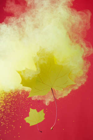 yellow autumn paper leaves with splash from holi paints on red Banco de Imagens