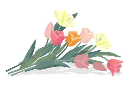 Illustration of bouquet of tulips Vector