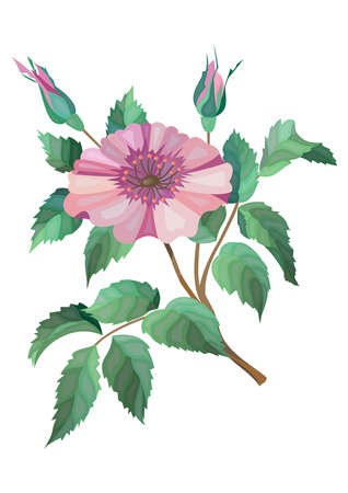 Illustration of abstract flower branch