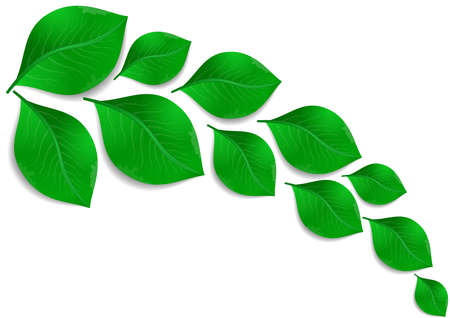 Illustration of abstract branch of green leaves isolated