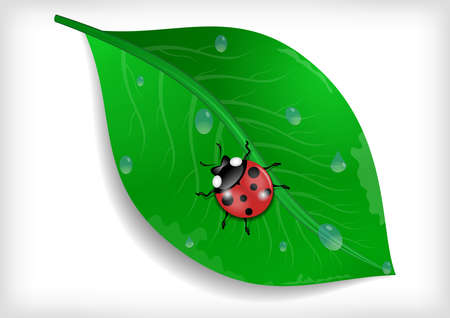 waterdrops: Illustration of green leaf with ladybird and waterdrops isolated Illustration