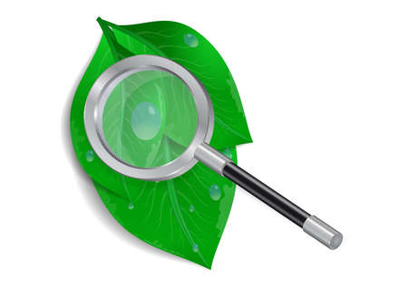 Illustration of magnifying glass, green leaves and waterdrops isolated Illustration