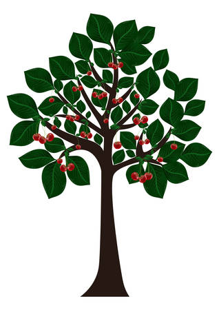 Illustration of tree with green leaves and cherries isolated