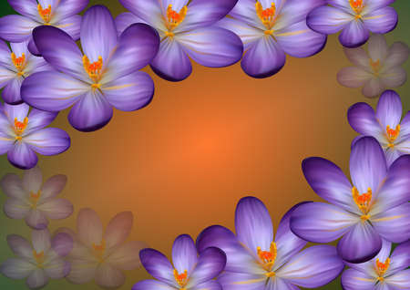 Illustration of colorful frame from crocuses with background  Illustration
