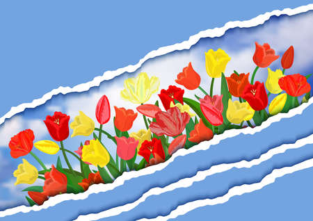 Illustration of spring colorful tulip flowers with torn paper borders and sky background