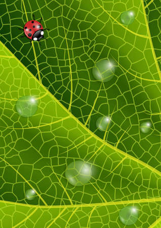 waterdrops: Illustration of green leaf texture with ladybird and waterdrops Illustration