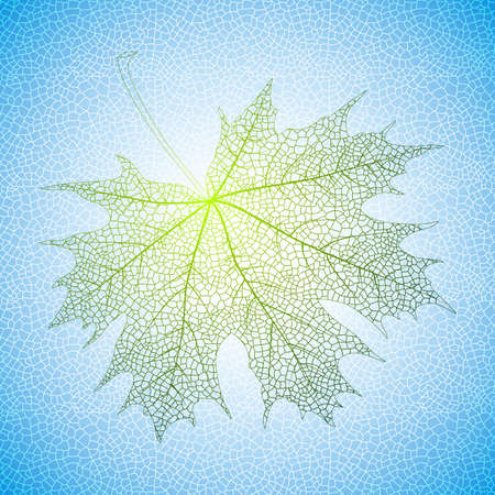 meshy: Illustration of green maple leaf with reticular background Illustration