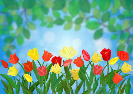Illustration of spring colorful tulip flowers with green leaves blurred background