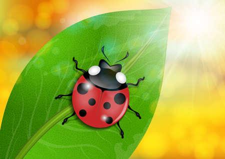 reticular: Illustration of ladybug on green leaf with bokeh background