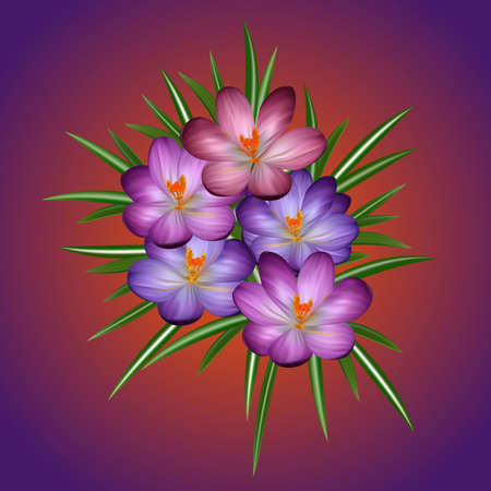 fragrant bouquet: Illustration of colorful crocus flowers with leaves