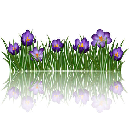 Illustration of floral border with purple crocus flowers and leaves