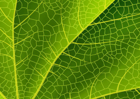 reticular: Illustration of green leaf background with reticular ornament