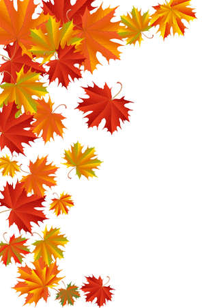 golden border: Illustration of autumn maple leaves in various colors isolated