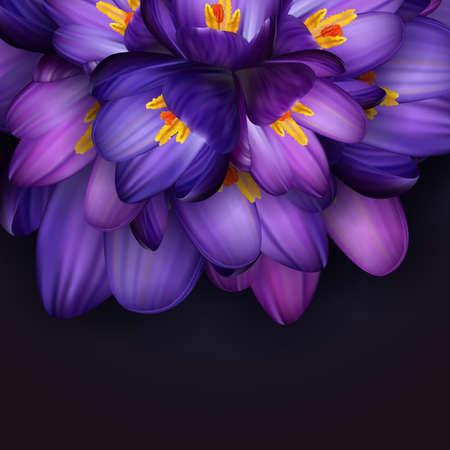 Illustration of purple crocus flowers with dark background