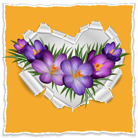 crocus: Illustration of purple crocus flowers and torn paper heart