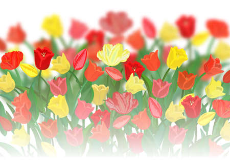 Illustration of colorful tulip flowers with blurred background Illustration