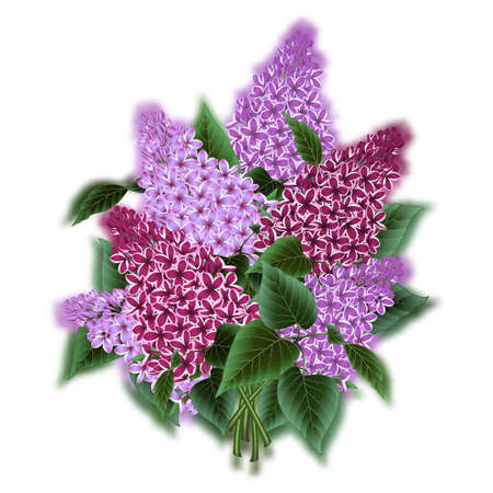 Illustration of bouquet from lilac flowers isolated Illustration