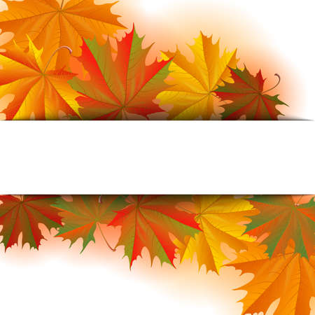 Illustration of autumn maple leaves background with white horizontal banner