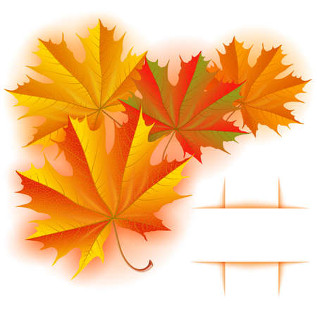 Illustration of autumn maple leaves background with banner isolated