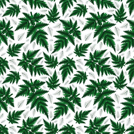 grass weave: Illustration of seamless floral pattern with fern branches isolated